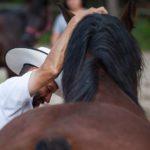 warszaty horsemanship 2016